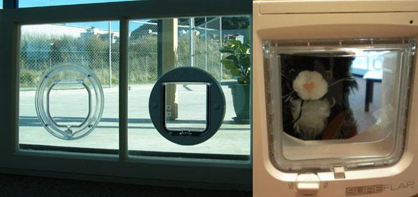 Microchip cat doors now available! & Kapi-mana Glass u0026 Glazing